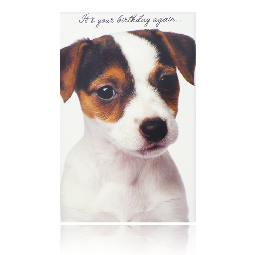 It's Your Birthday Again Card (Jack Russell)
