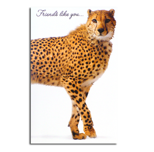 Cheetah Friendship Greeting Card