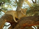Protect 1000 sq ft of Lion Habitat